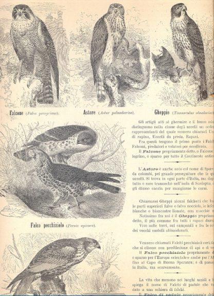 Atlanti di animali con brevi cenni su ognuno di essi.