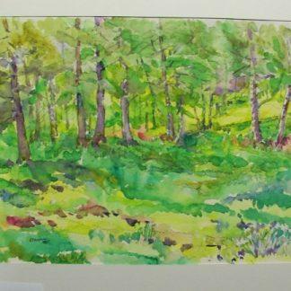 Il bosco dell'Apiario di Adolfo.